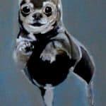 cropped-Hund1.jpg