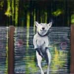 Hund vor Zaun - Kopie